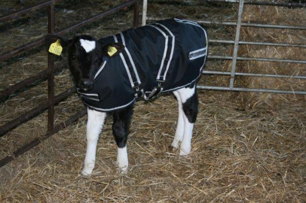 Cosy Calf Jacket Animal Farmacy