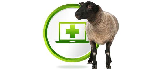 Sheep Health Online