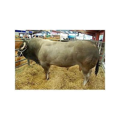 Beef Finisher|Animal Farmacy