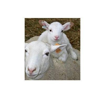 Tubby Pre Post Lambing Animal Farmacy