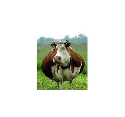 Tubby Precalver|Animal Farmacy
