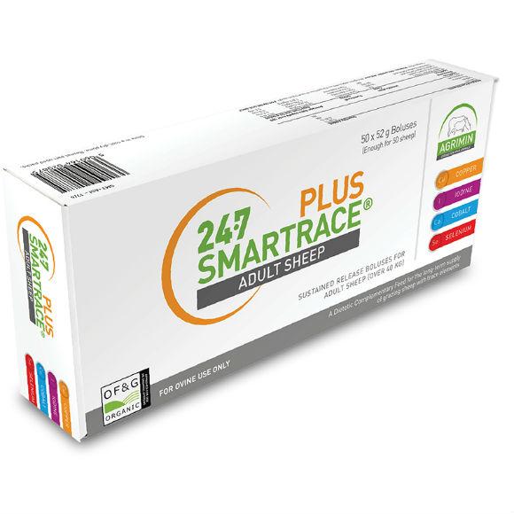 Smartrace Plus Sheep|Animal Farmacy