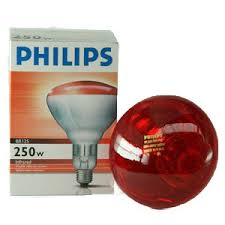 Philips Heat Bulb|Animal Farmacy
