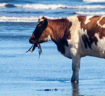 Seaweed|Animal Farmacy