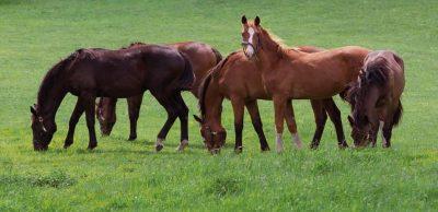 DLF Horsemax Animal Farmacy