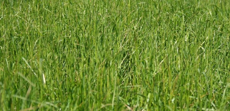 DLF Heavy Soil|Animal Farmacy