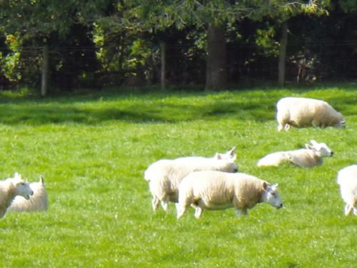 DLF Grass Seed|Animal Farmacy