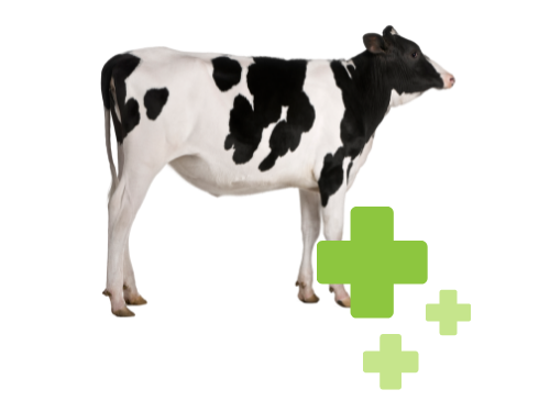 Alternative Animal Health